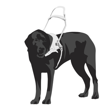 Nouvelle - Qu'est-ce qu'un chien d'assistance
